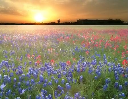 ...bluebonnet sunset...