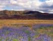 Meadow on Carrizo...