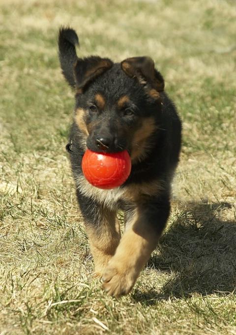 Asais Kyla and her ball