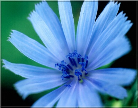 The Brilliance Of Blue