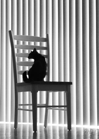 Cat Between the Lines