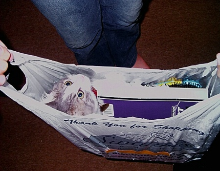Shh!!! Don't Let the Cat out of the Bag