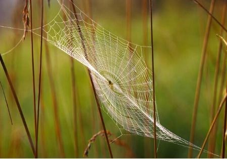 Parabolic Web