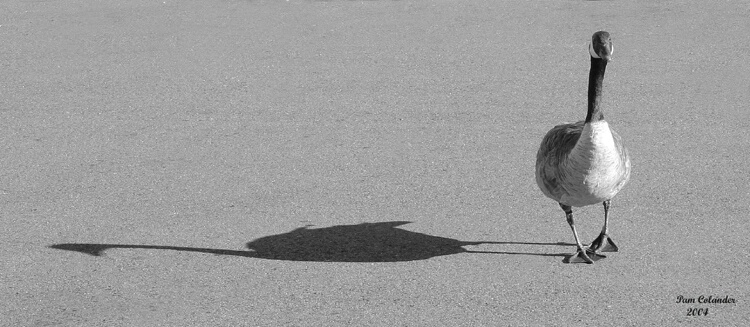 Strolling with my shadow