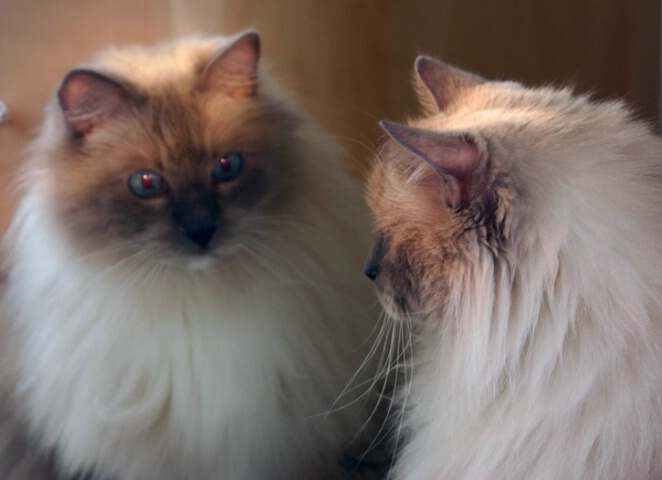 Reflecting Felines