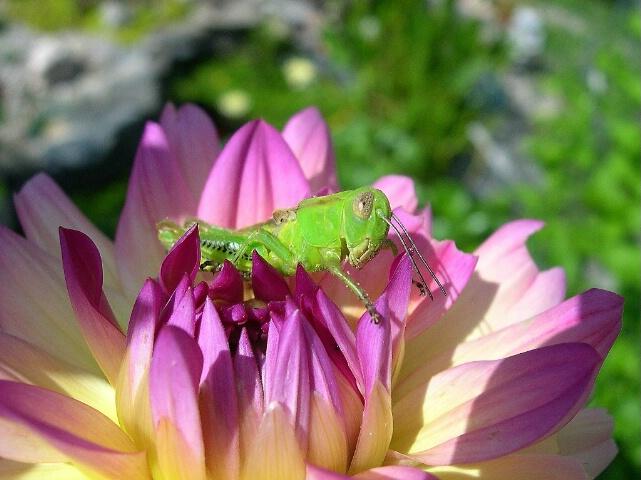 Cute Little Grasshopper