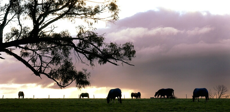 Silhouetted Horses @ Sunset