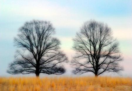 2 tree's and a bird