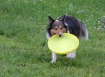 Playing Frisbee