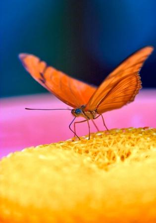 Scratchy Butterfly