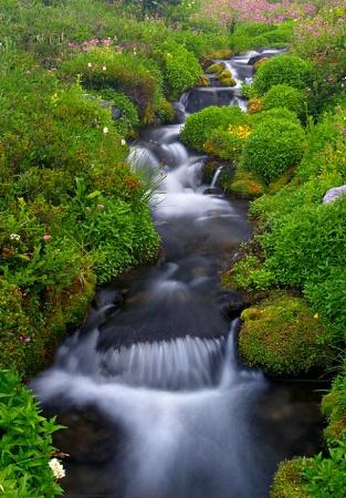 Stream Through Wild flowers