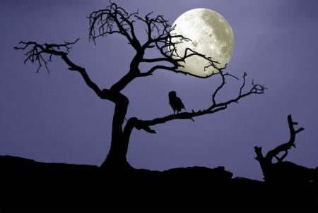 Burmis Moon