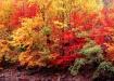 Fall Foliage, Por...