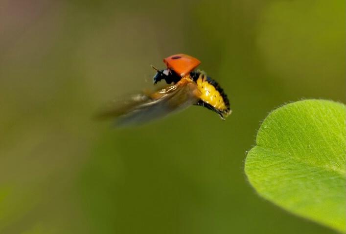 A ladybirds dress