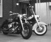 Harleys in Red Ba...