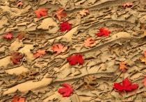 Autumn Leaves on Dried Stream bed, Utah