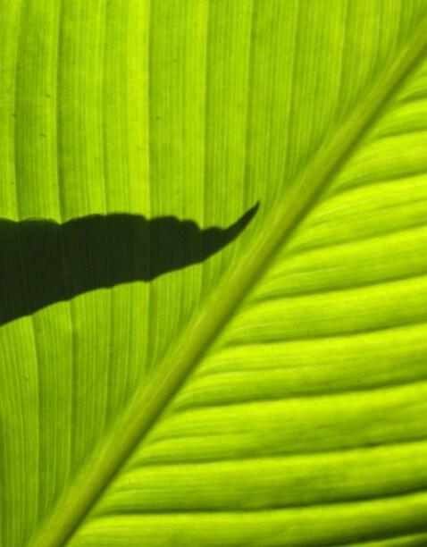 Leaf Behind