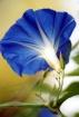 Glory..ious Blue