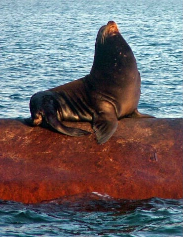 King of the Oil Pipe, San Pedro, CA