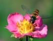 Again Bee