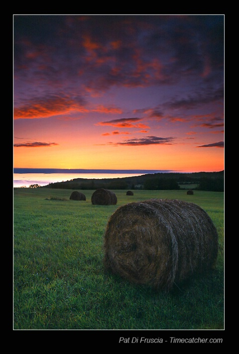 Out on Bales