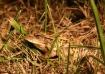 Midnight Frog