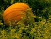 ~Happy Autumn~