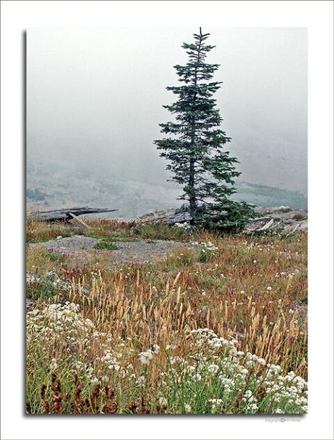 Fog on Johnston Ridge