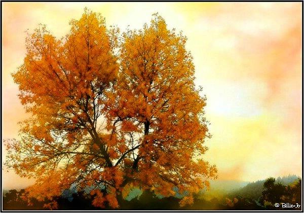 Seasons Change II