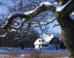 Danish Winter Sce...