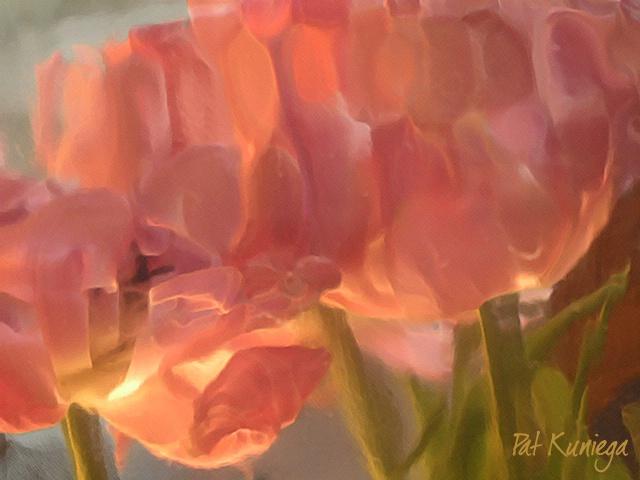 Tulip Reflections - POTD