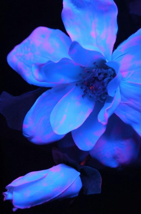 Camilla Glow