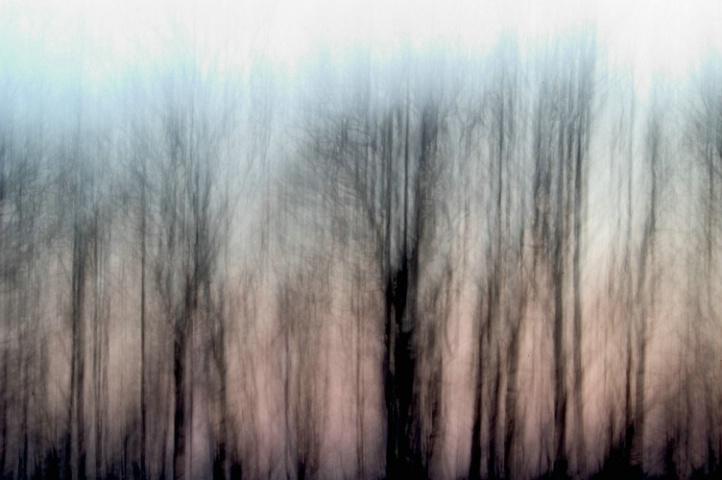 Forest - original