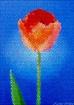 A Tulip for Darre...