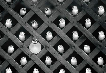 The Peeples vs. Jay Dour (POTD 05/16/05)