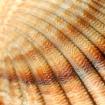 Detail sea shell