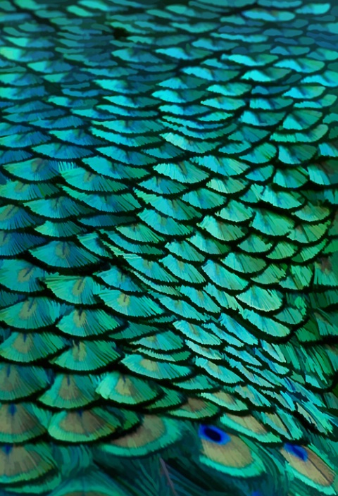 Fish Scales?