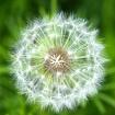 Seeds of Spring