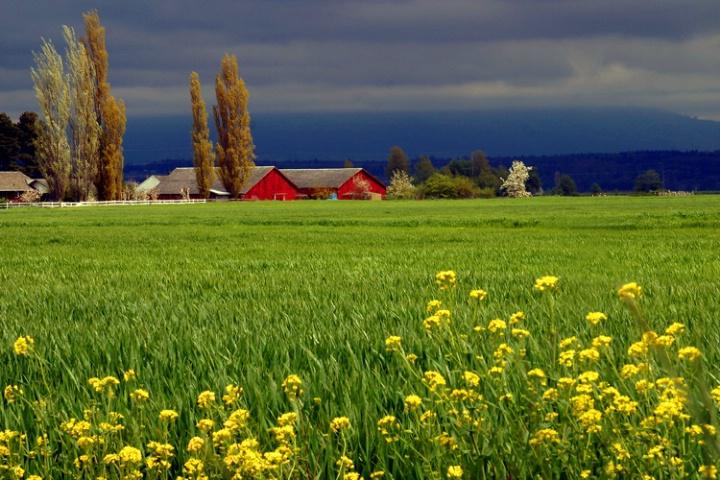 Spring in the Northwest