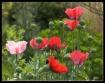 Garden Sunbathers