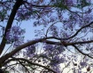 a tree.......