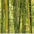 © Sharon C. Nickodem PhotoID# 878632: Bamboo