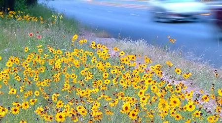 ...roadside flowers...