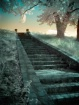 Oakwood Stairway