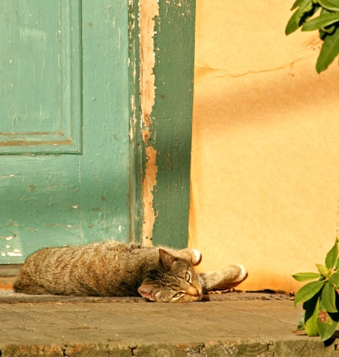 Cat on a Hot Wooden Porch