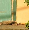 Cat on a Hot Wood...
