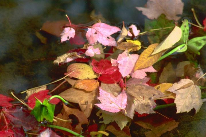 Autumn Floor - ID: 882337 © Deborah A. Prior