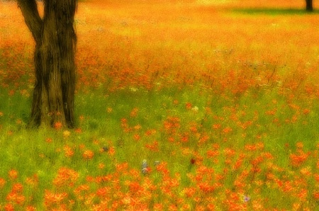 What a Day for a Daydream - Texas Hill Country