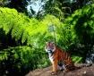 Rainforest Cat