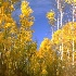 © Heather Robertson PhotoID# 894290: Forest lane in fall